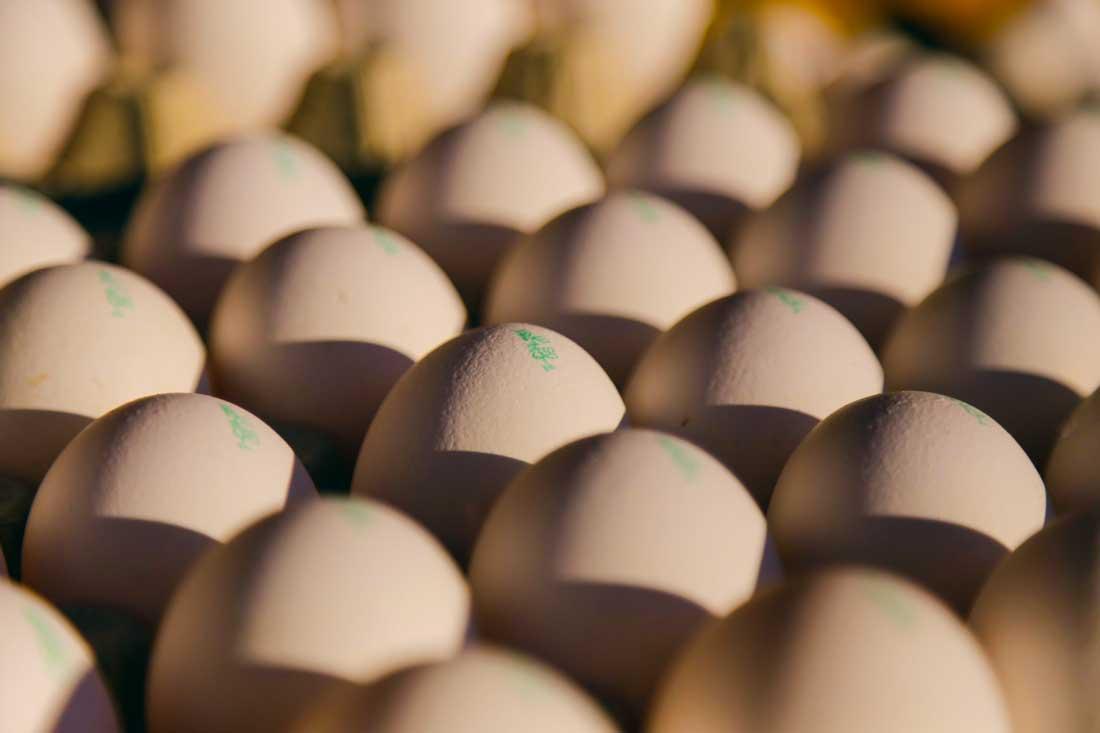 Photo of Un don de 600000 œufs pour les Banques Alimentaires