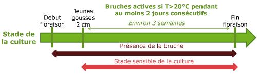 schema_bruches