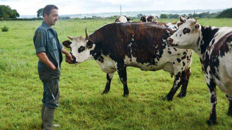 alimentation des laiti res mettre les pieds dans l herbe journal paysan breton. Black Bedroom Furniture Sets. Home Design Ideas