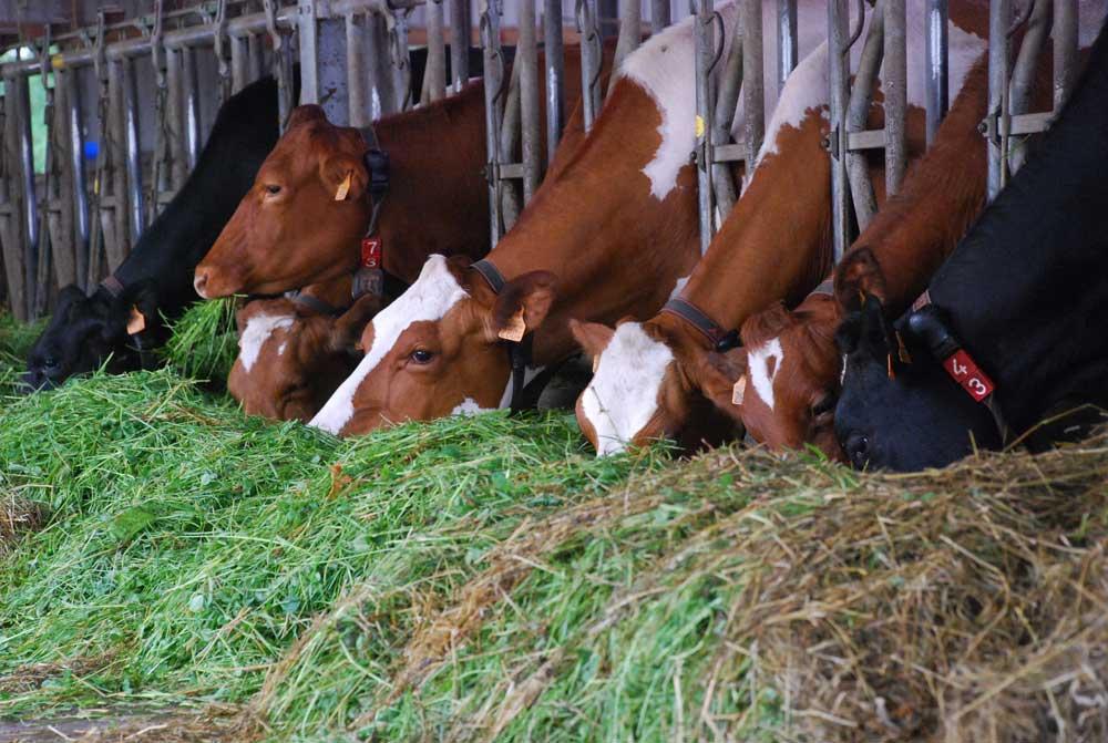 """Photo of 140 laitières en bio intensif au """"Village de l'herbe"""""""