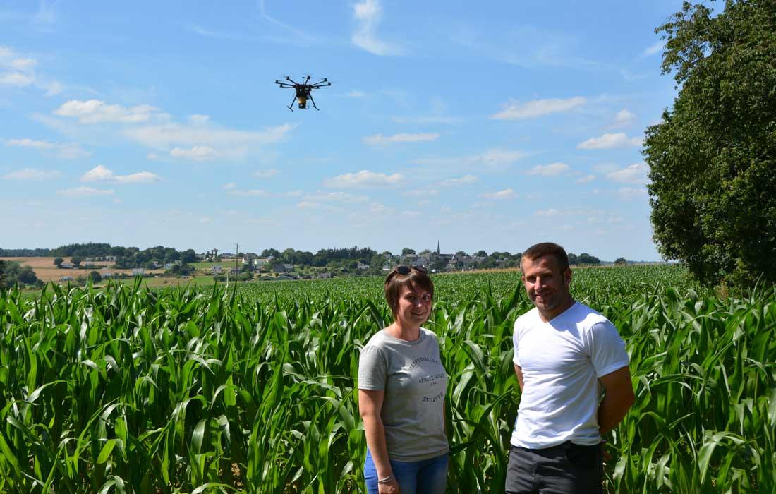 Photo of Pyrale du maïs : des trichogrammes largués par drones