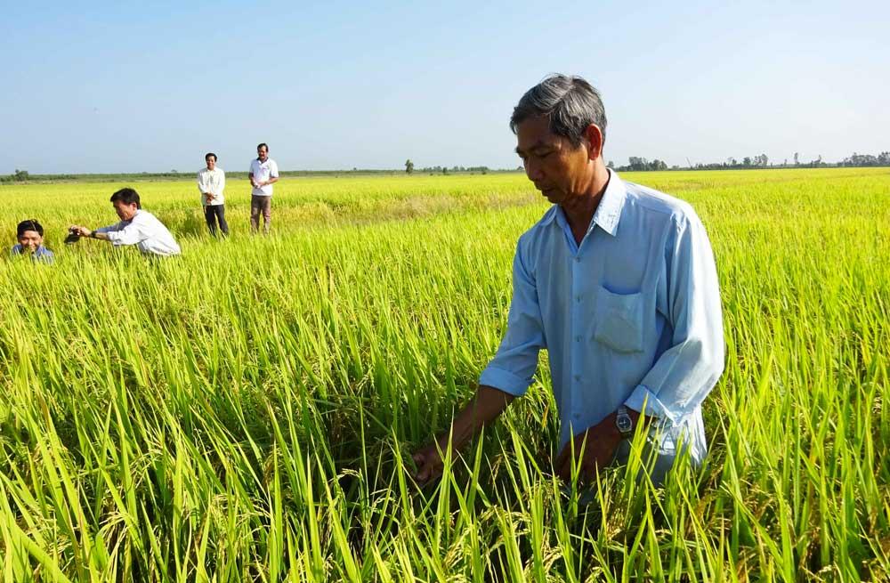 agriculteur-riz-vietnam