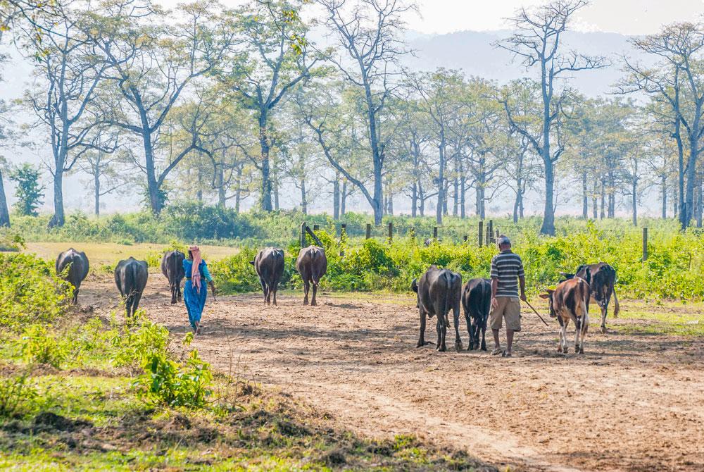 agriculture-inde