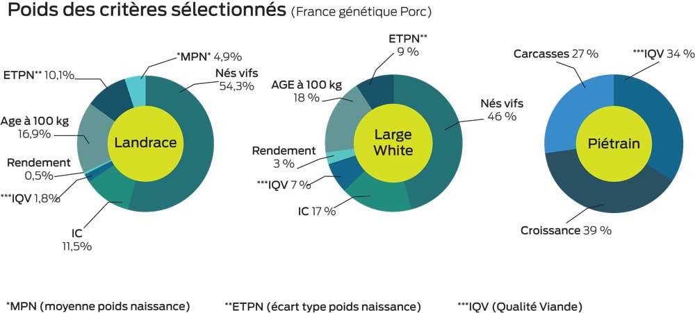 genetique-porc-criteres