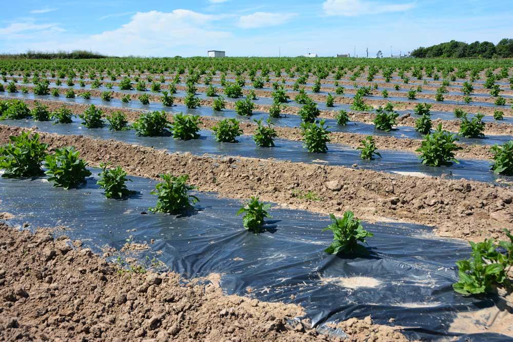 Photo of Les légumes bio recherchent des producteurs