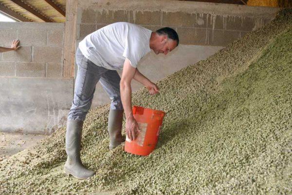 Jérôme Baslé ajoute 2,5kg de luzerne en bouchons dans la ration quotidienne de ses vaches.