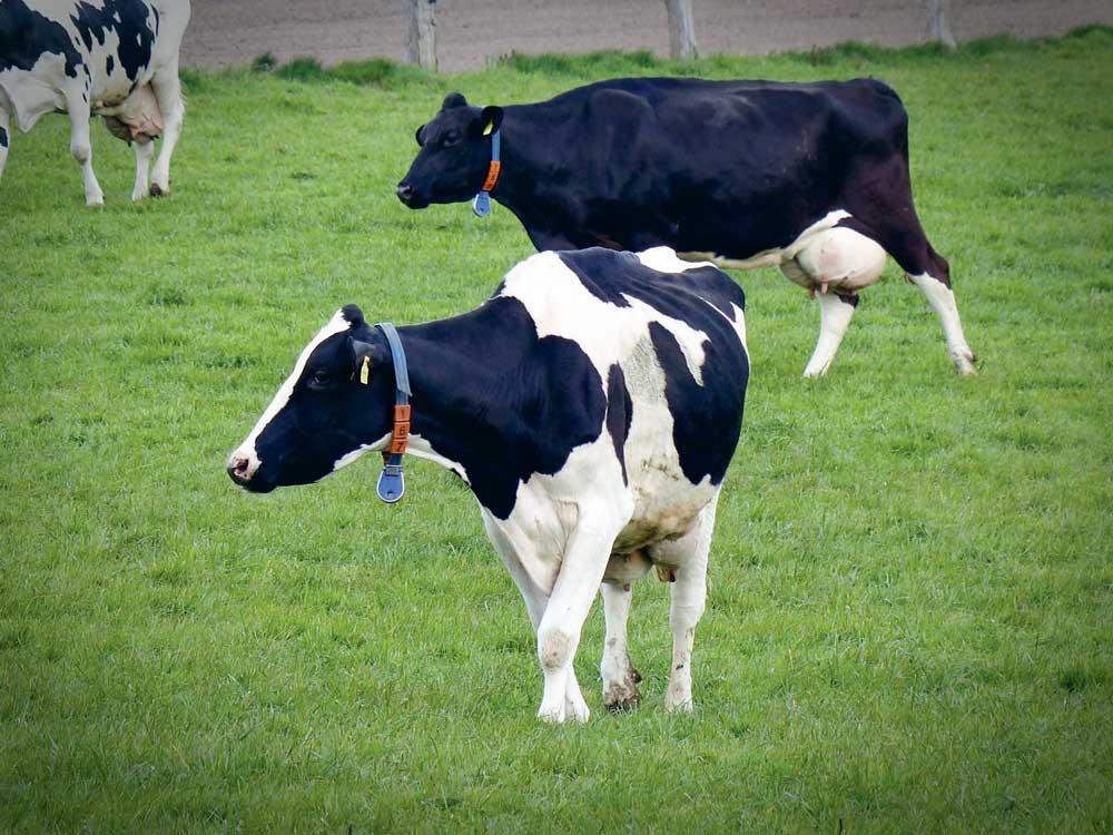 Photo of Pays-Bas : le marché du lait biologique freiné