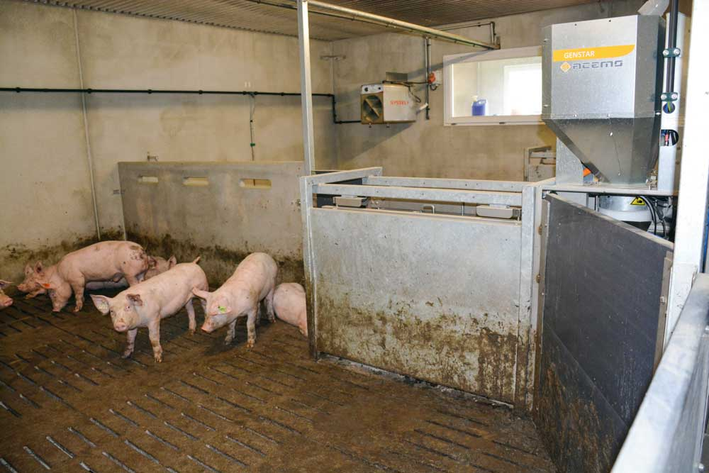 Photo of Porc : les premiers index génomiques désormais disponibles