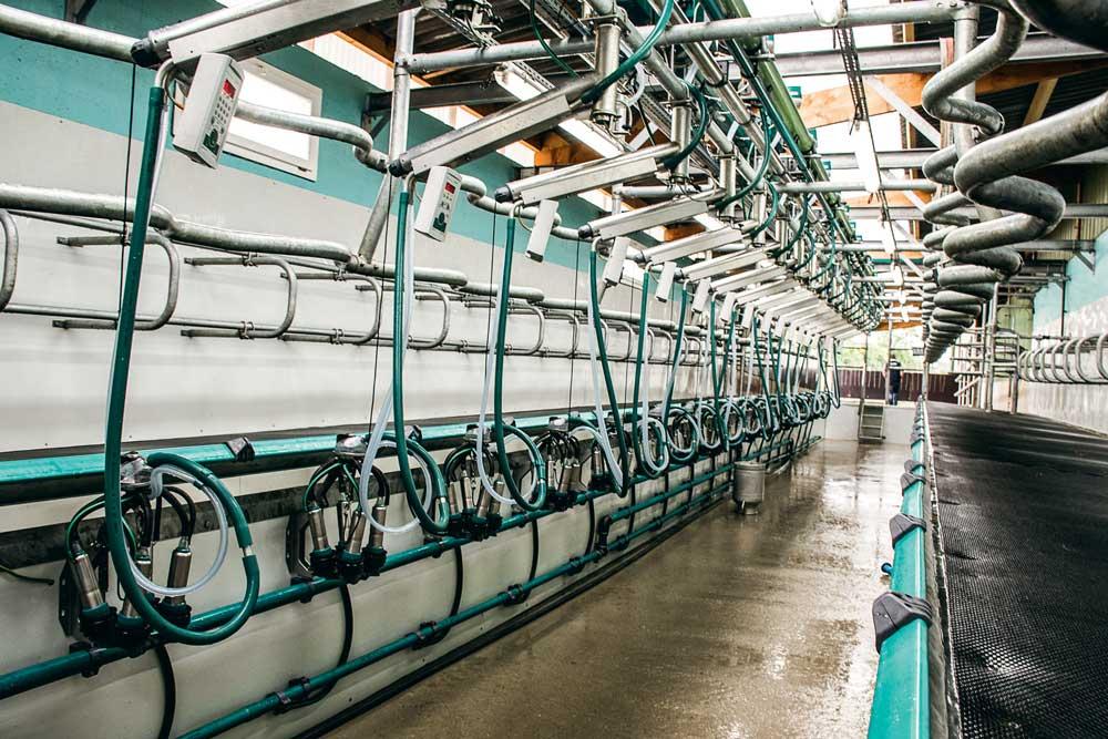 L'installation de traite 2 x 18 postes simple-équipement sous un auvent accolé sur la longueur du bâtiment existant. Au mur, du polycarbonate facile à laver. Sur les quais, du caoutchouc pour le confort des animaux.