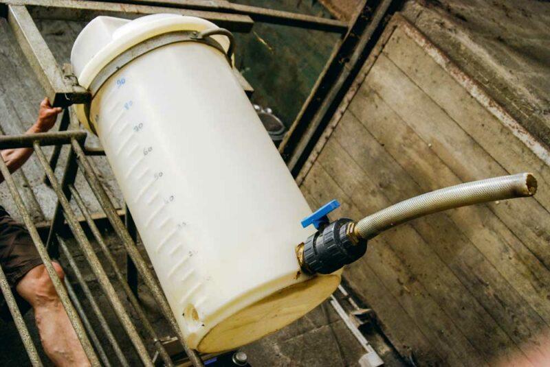 Les éleveurs nourrissent les jeunes veaux au yoghourt. Un système de pompe envoie le lait directement des bidons du bloc traite au local près de la nurserie. La distribution est simplifiée par un moyen imaginé par Gilbert: un seau avec robinet et verseur est suspendu à un rail pour lui faire traverser la nurserie sans effort. A chaque entrée des boxes, un tuyau est relié à un bac à tétines. La distribution est également rapide: elle ne nécessite qu'un petit quart d'heure pour servir une quarantaine de veaux. « Pour assurer la qualité du produit et réduire les risques, le fond de cuve est refait chaque jour, pour le prix de deux yaourts. »