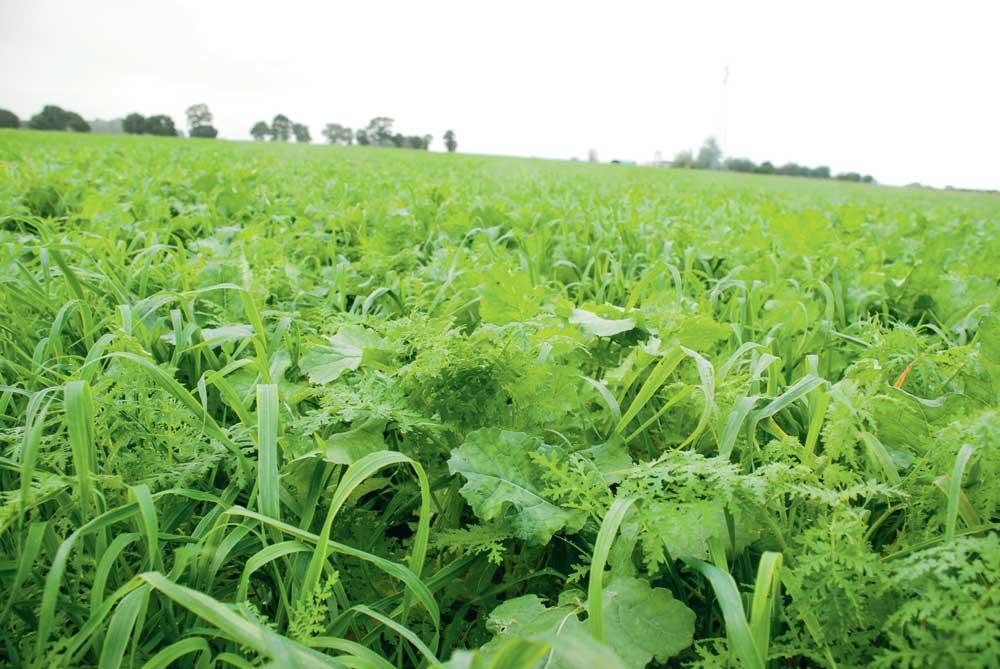 Photo of Trouver le couvert végétal idéal