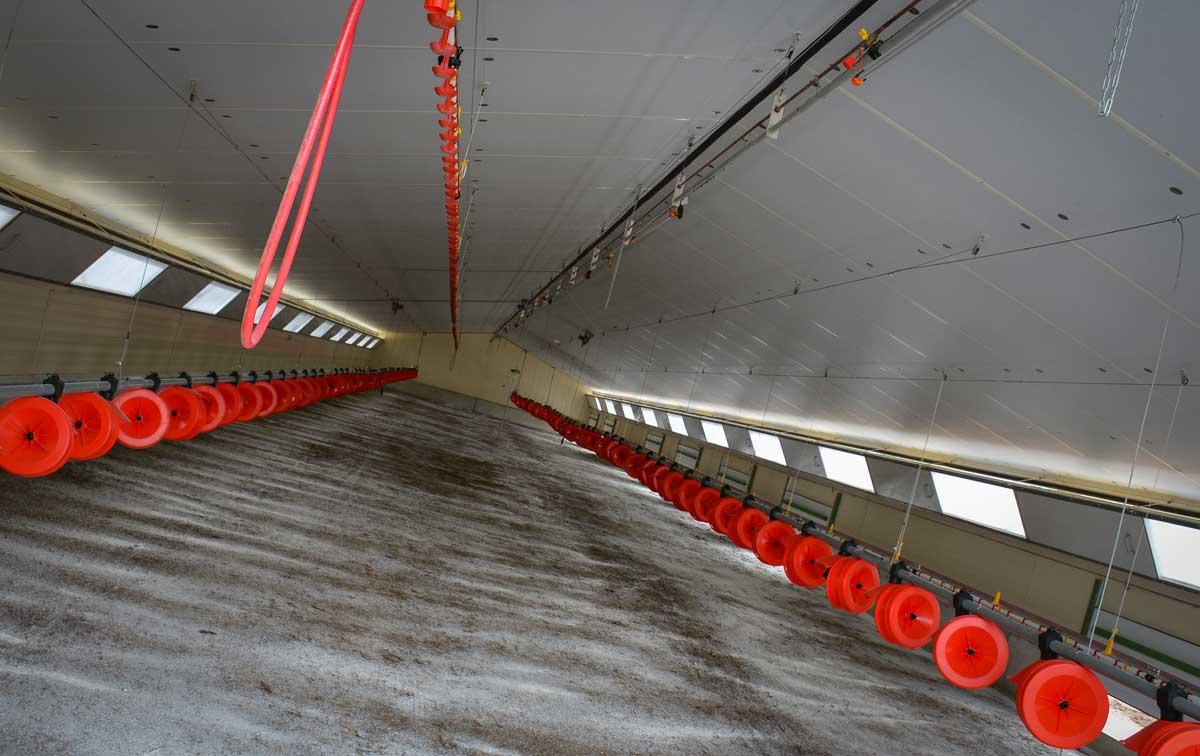 Les poulaillers de 400 m2 sont équipés avec 2 chaînes d'alimentation et 2 lignes de pipettes pour améliorer les performances techniques.
