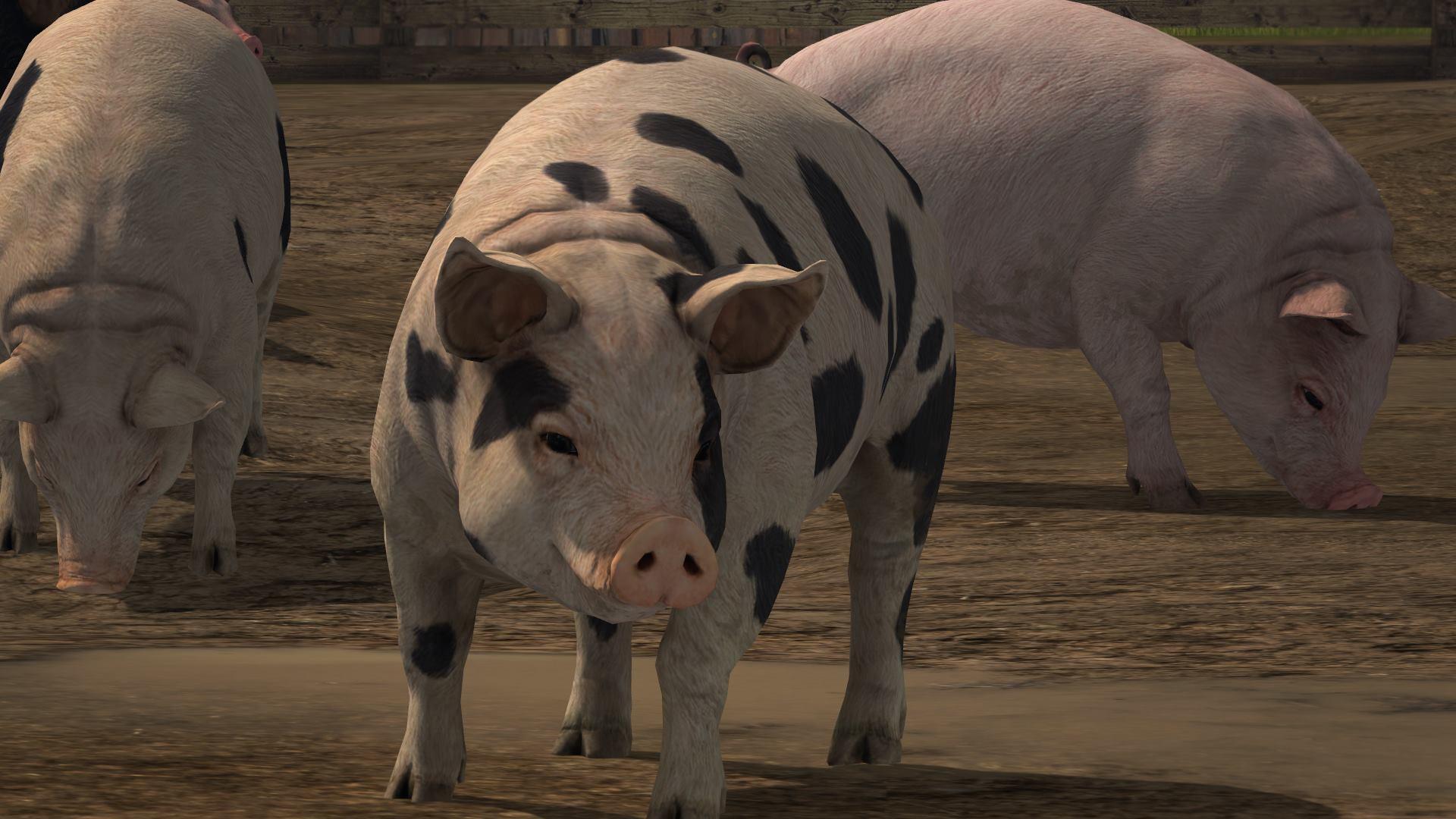 farming-simulator-17-porc-cochon