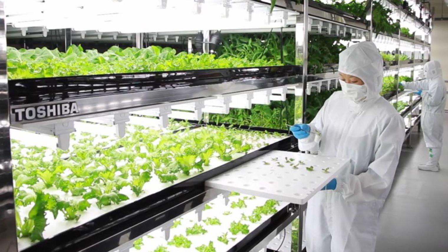 Photo of L'agriculture du futur