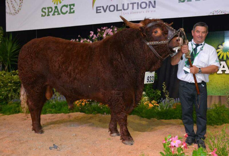 Les prix de championnat, mâle et femelle, ont été attribués à deux animaux de l'élevage de Cécile Ropert, de Sotteville dans la Manche. Né en janvier 2014, le taureau Jongleur a également reçu le titre de Meilleur animal du concours.