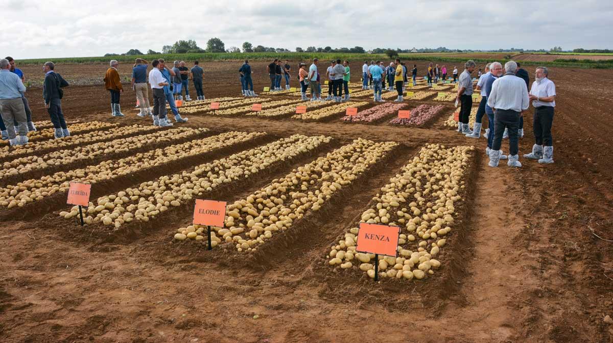 Photo of La France, premier exportateur mondial de semences en 2016/2017