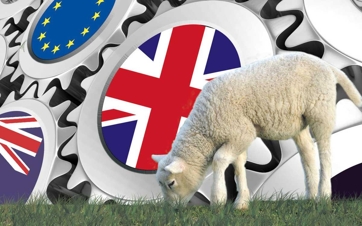 Photo of Le Brexit inquiète la filière ovine