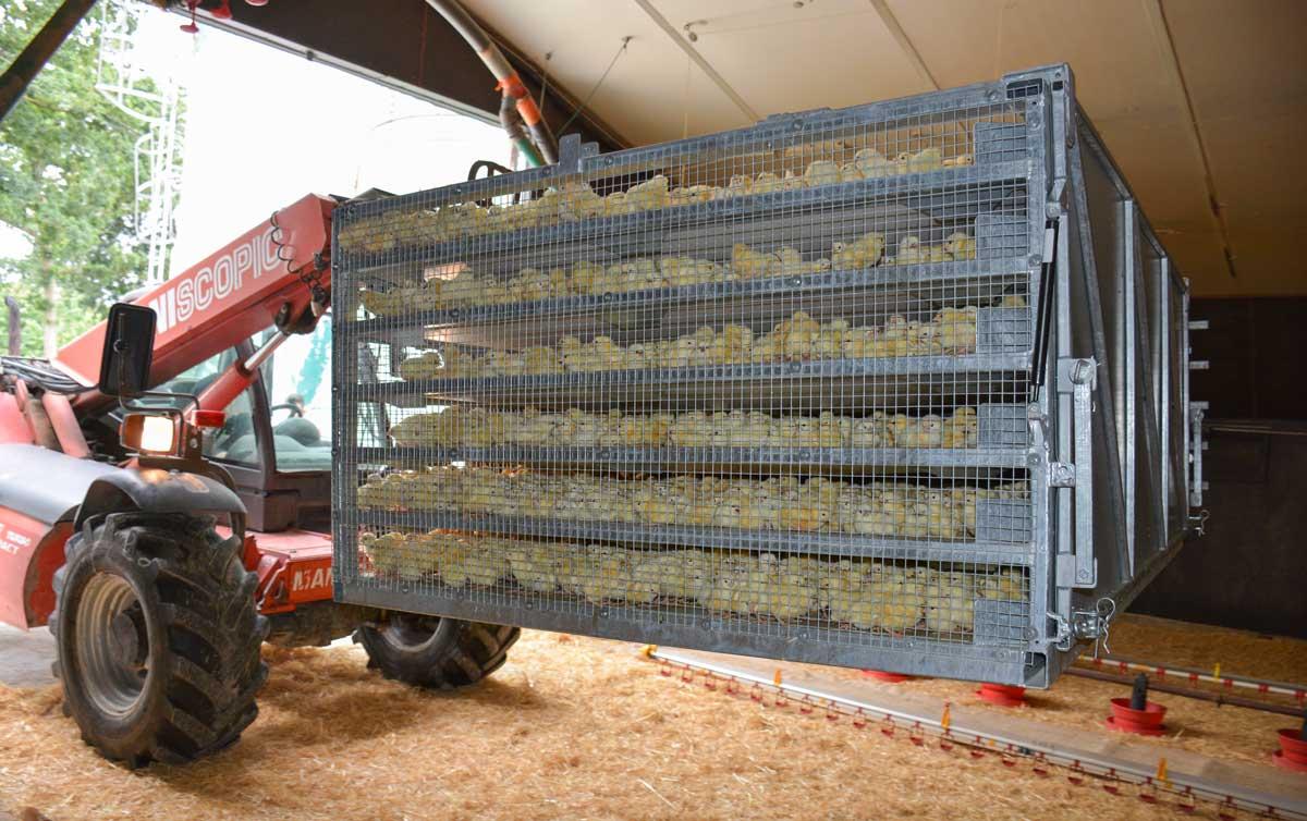 Photo of Un container pour une mise en place rapide des poussins
