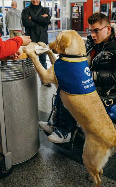 À la gare, Goon (bien identifiable grâce à sa cape d'handi'chiens) fait un « up » au comptoir pour que son référent Victor récupère ses billets.