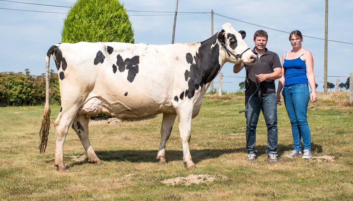 Cathy et Yvan Peucet soint heureux de participer à leur deuxième Space consécutif en présentant Harpe, une vache au format exceptionnel (1,75 m au garrot) pointée 88 points en 2e veau.