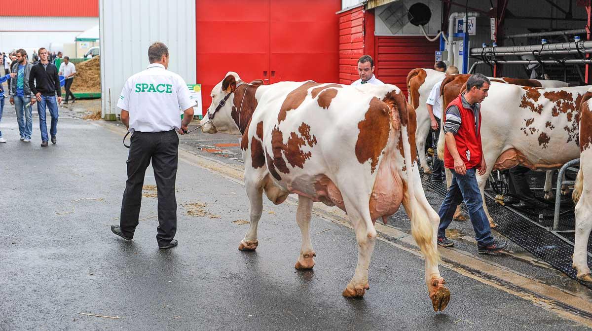 Photo of Impossible pédagogie de l'élevage : comment reconnecter éleveurs et consommateurs ?