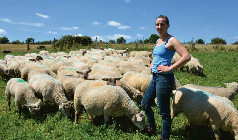 Amandine Blanc présente le lot de brebis gestantes Mouton Vendéen qui va agneler en novembre.