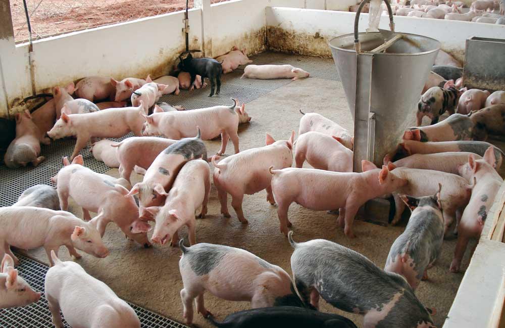 Photo of Importations brésiliennes de viandes : Le Foll renforce les contrôles