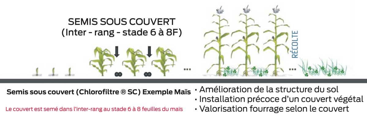 Photo of Des couverts végétaux adaptés à la monoculture de maïs