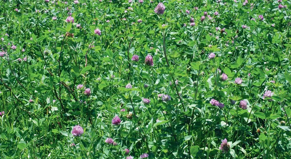 Photo of Déficit de la pousse de l'herbe, jamais deux sans trois