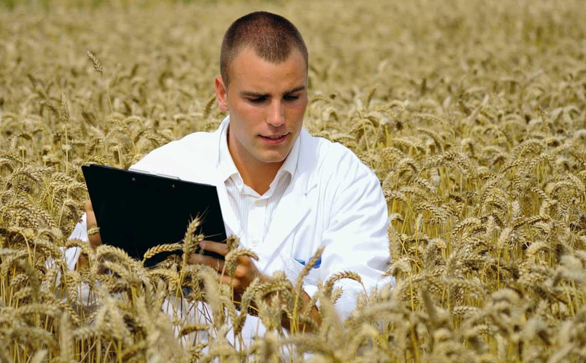 Photo of Inventer le blé de demain