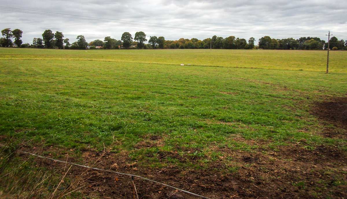 Photo of Consommer les moindres repousses d'herbe cet automne