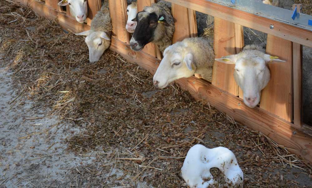 Photo of Une rentrée réussie en bergerie