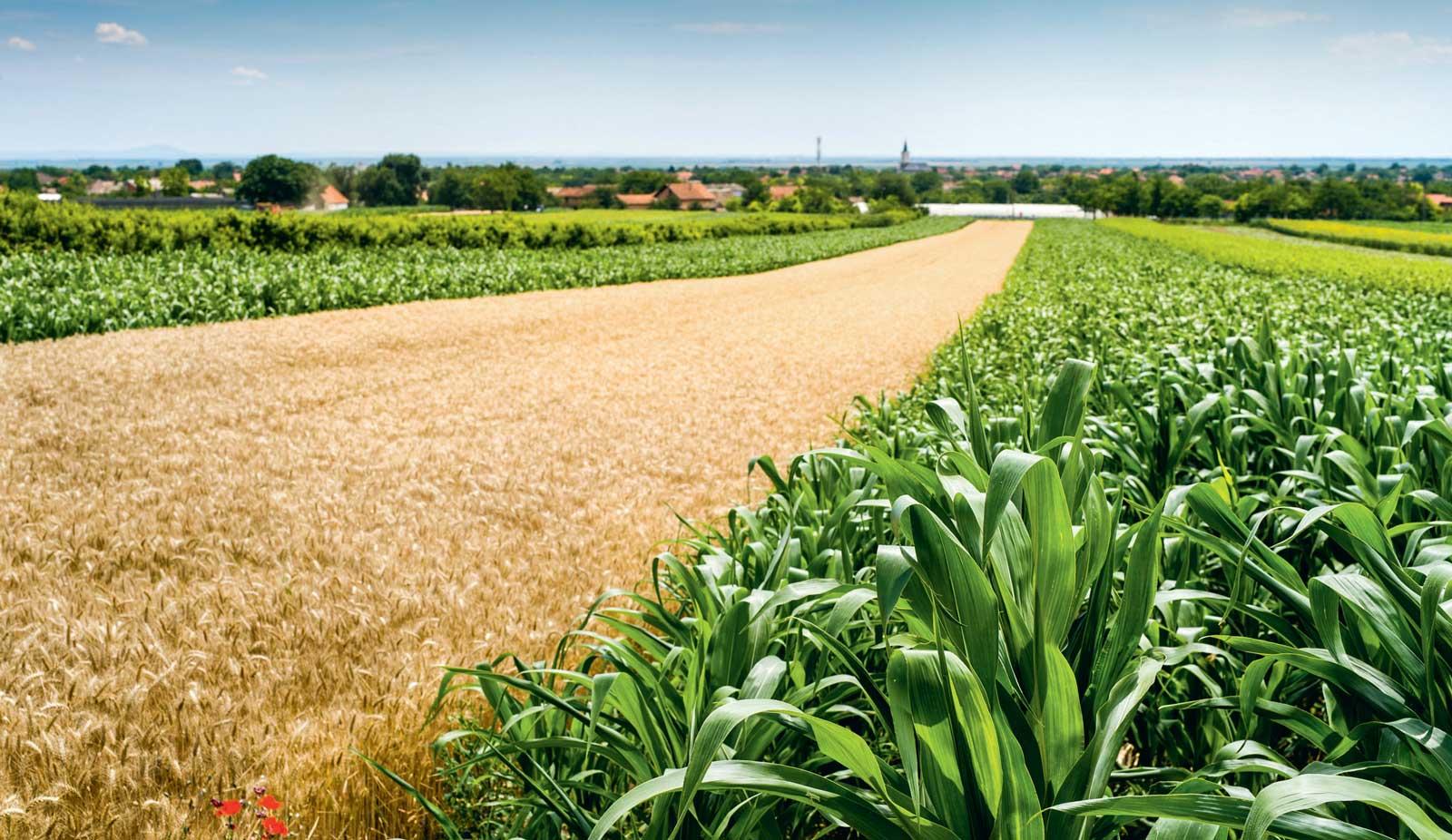 Photo of Essais : l'agronomie en a sous le pied