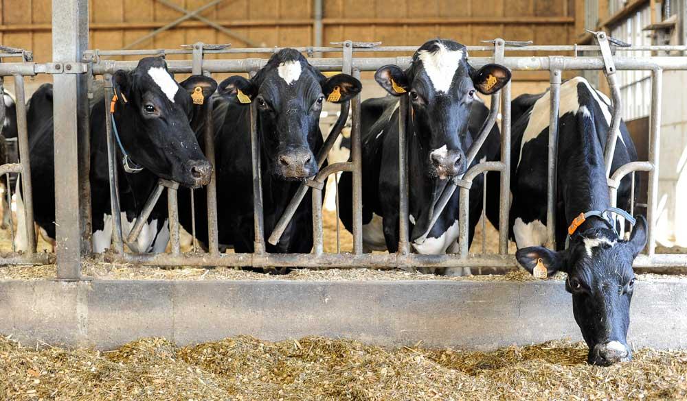 Photo of Du lait produit par les fourrages