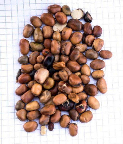 « Lors du toastage, le cœur de la graine est porté à 100 °C. La surface change de couleur, devient marron – noir et cassante », explique Joël Guégan.