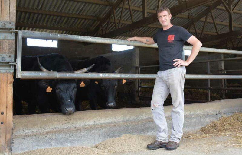 Sébastien Chérel devant ses bœufs de race japonaise Wagyu prêt à être vendus sous la marque Miyabi