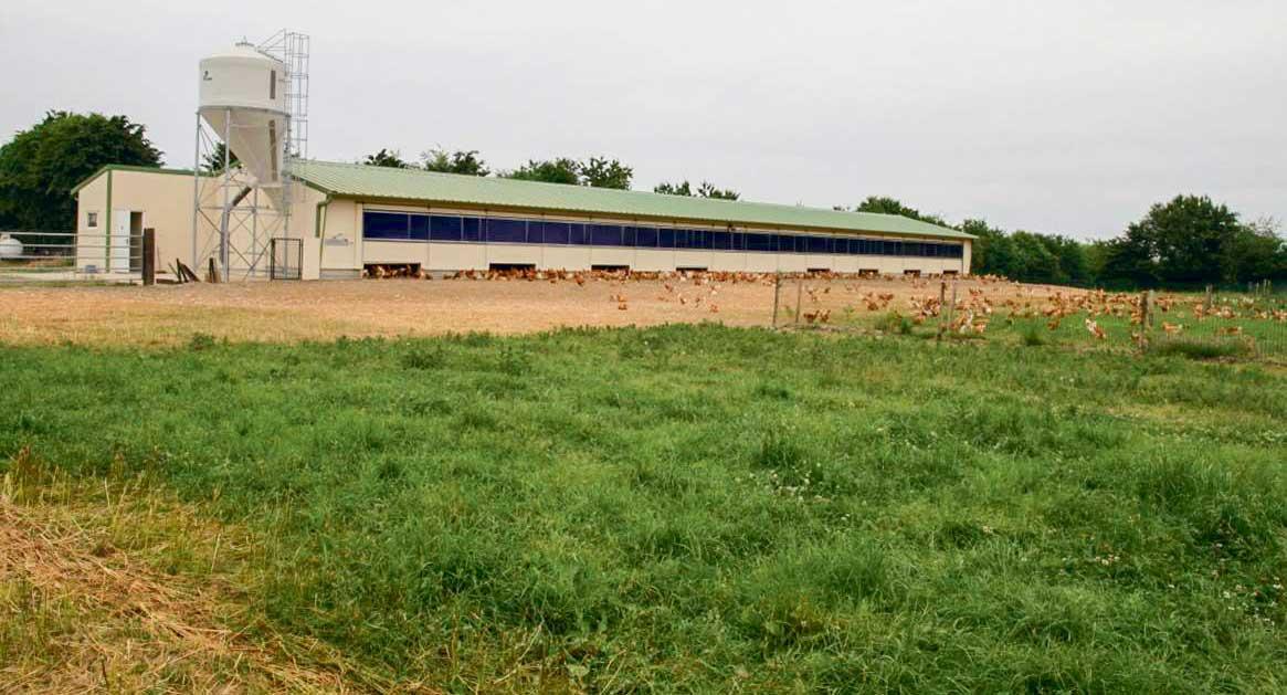 Un plan de plantation du parcours des poulets est établi systématiquement pour tous les poulaillers neufs.