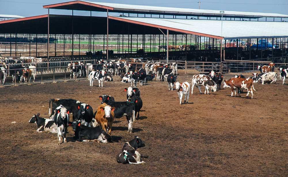 Photo of Les farmers américains soutiennent Trump