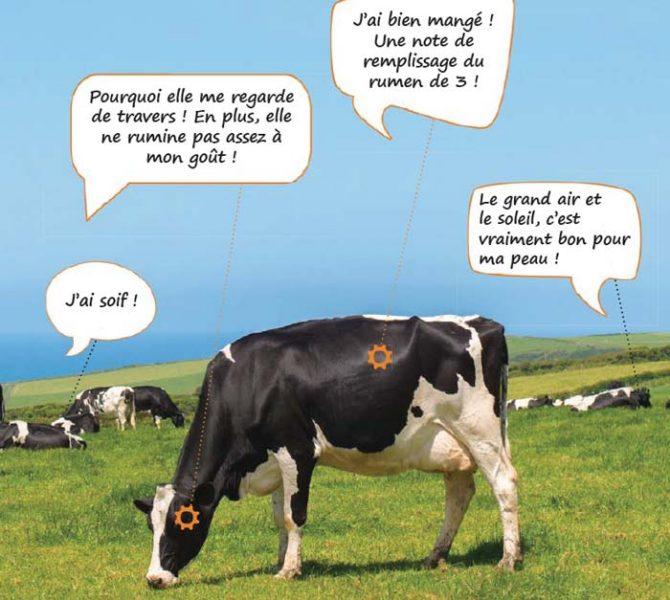 bcel-signes-vaches