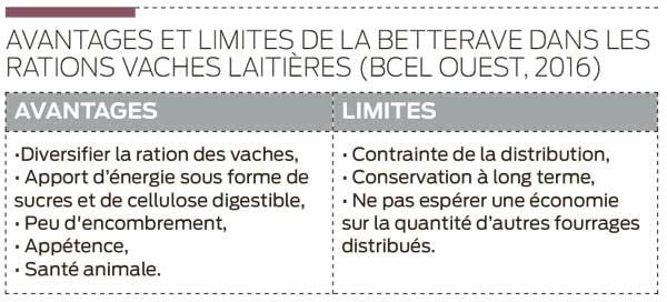 betterave-avantage-ration-aliment-lait