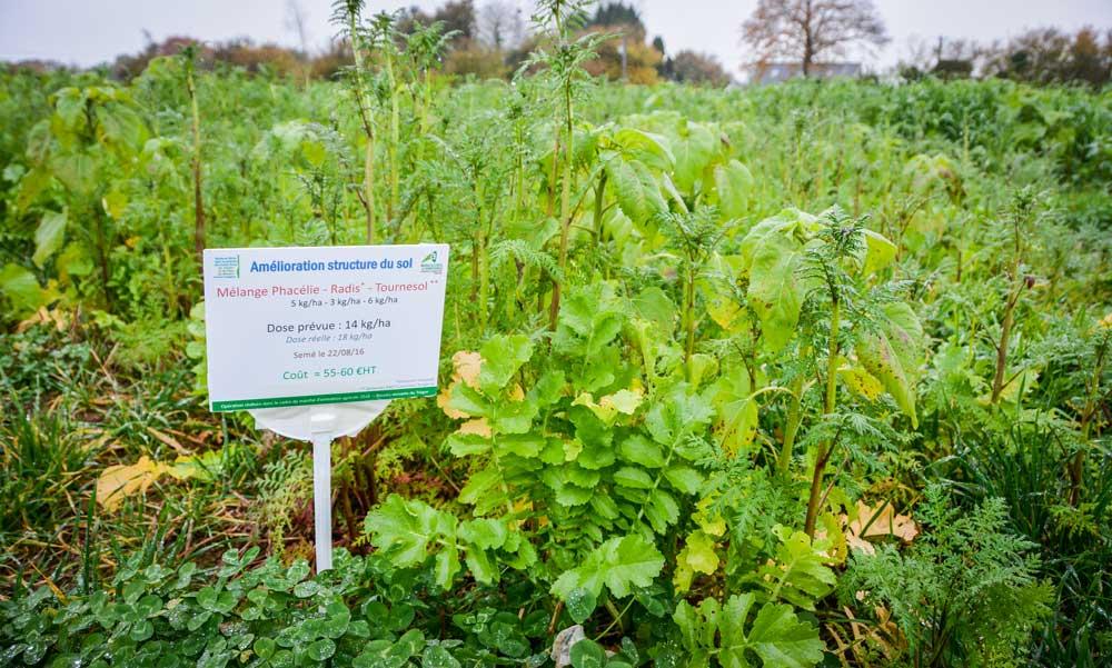Les mélanges variés couvrent les situations des producteurs de légumes, mais respectent aussi les SIE.