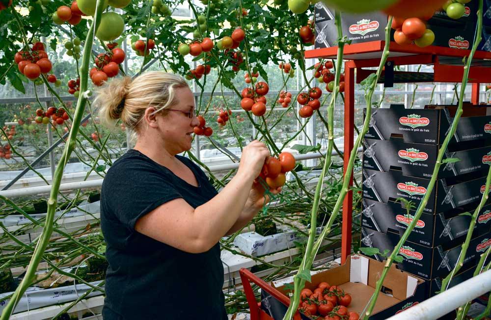 dossier-legumes-tomates