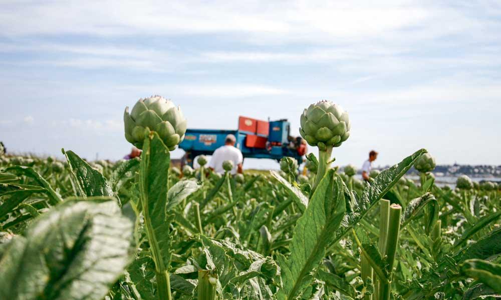 Photo of Légumes : réduire l'impact sur les ressources en eau