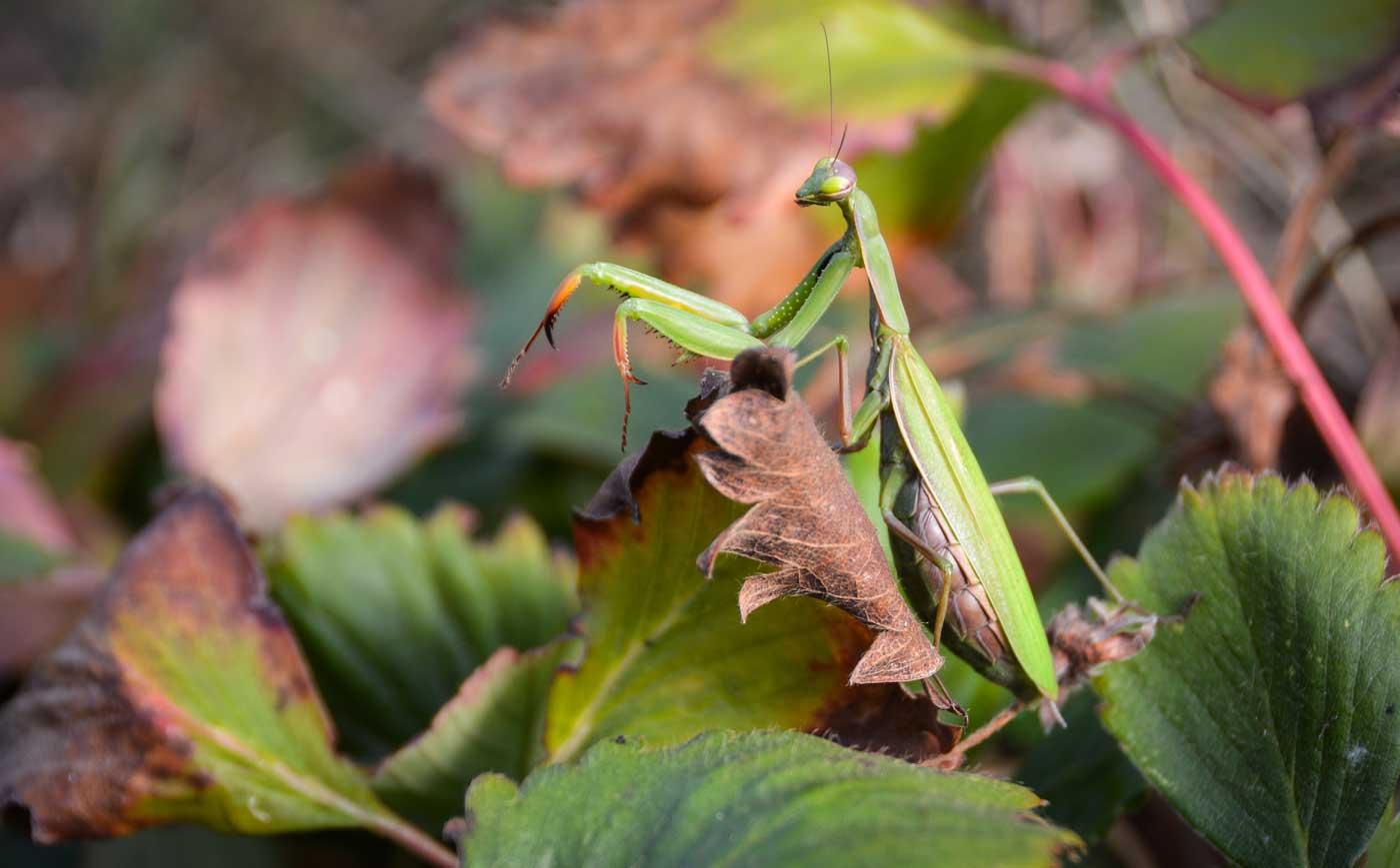 Photo of Le bio attire les insectes auxiliaires