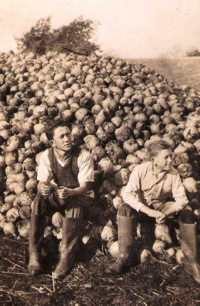 Souvenir du travail laborieux de novembre à la ferme avec le ramassage des betteraves.