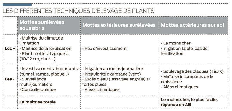 technique-elevage-plant-chou-fleur