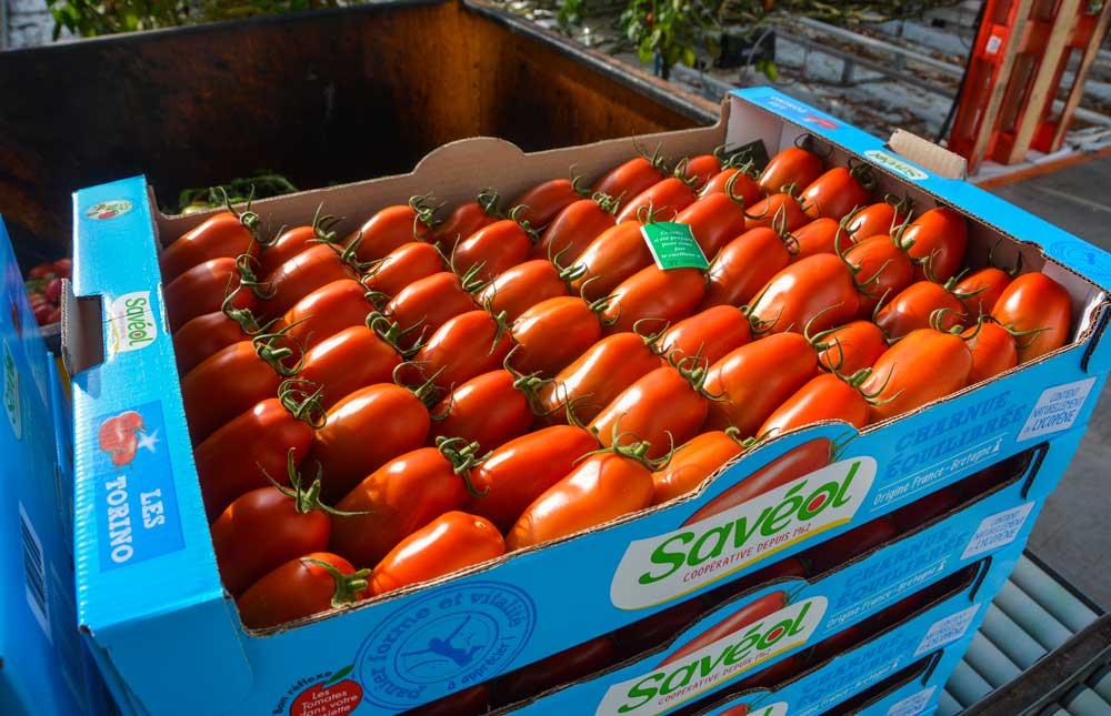 Photo of Limiter l'impact sur l'environnement en tomates sous serre