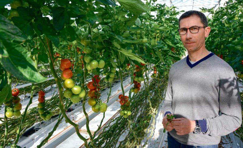 L'activité de production  de tomate génère des déchets. Ils sont recyclés au maximum par Jean-Yves Le Nard,  de l'EARL Tom'Pousse.