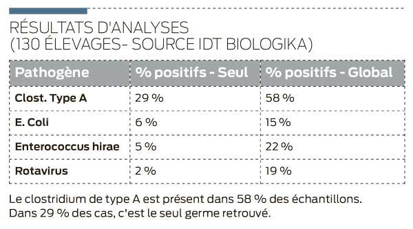 analyse-bact-porc