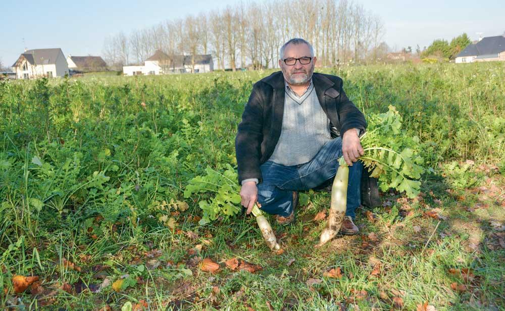 « La structure du sol doit être bonne pour rendre les bactéries efficientes », selon Dominique Prioul, comme en témoigne le couvert de radis chinois. À gauche, radis issus d'une parcelle témoin ; à droite, d'un champ au sol bien structuré.
